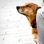 Коррекция агрессивного поведения собаки