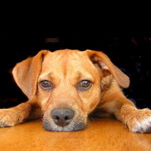 Неврозы у собак