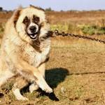 Агрессивное поведение у собак