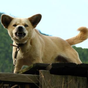 Собачья агрессия