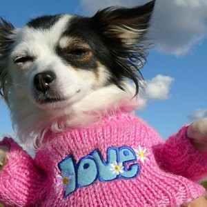 Потребности и мотивации собаки
