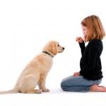 Развитие нервной системы собаки
