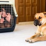 Как добиться от собаки послушания