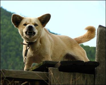 Оборонительная агрессия собаки