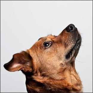 Собак приветствует хозяина