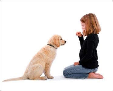 Развитие нервной системы у собак